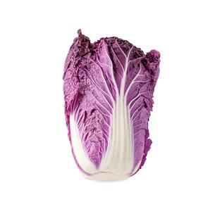 白背景の紫白菜の写真素材 [FYI03814041]