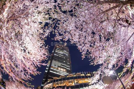 桜と東京ミッドタウンの写真素材 [FYI03814077]