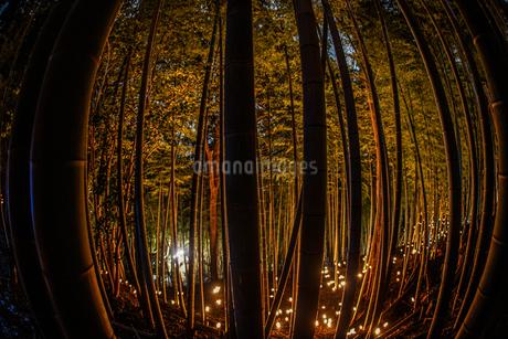 竹林ライトアップ(小机城址市民の森)の写真素材 [FYI03814083]