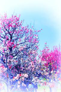 大阪城桃園の写真素材 [FYI03814099]
