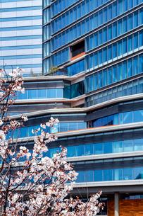 高層ビルと桜の写真素材 [FYI03814116]