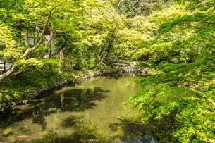 初夏の柳原神池の写真素材 [FYI03814122]
