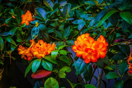南国のジャングルの植物群の写真素材 [FYI03814207]