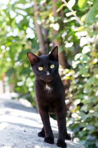 イスタンブール石壁に上った黒猫の写真素材 [FYI03814472]