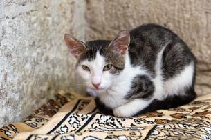 イスタンブール旧市街の石壁と猫の写真素材 [FYI03814479]