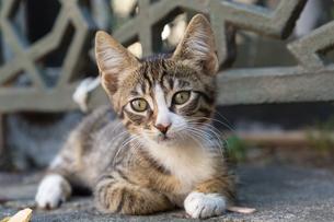 イスタンブール旧市街の子猫の写真素材 [FYI03814487]