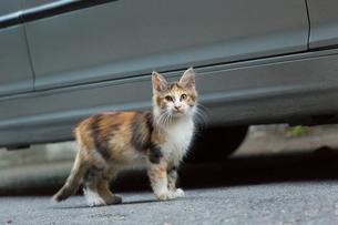 長毛で三毛柄の子猫の写真素材 [FYI03814493]