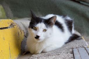 イスタンブール、階段に横たわる黒白の猫の写真素材 [FYI03814499]
