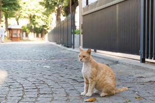 イスタンブールの観光地にたたずむネコの写真素材 [FYI03814549]
