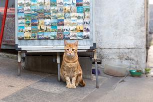 イスタンブール、お店の前で座るネコの写真素材 [FYI03814552]