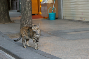 イスタンブールの街を散歩する猫の写真素材 [FYI03814554]