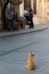 イスタンブールの石畳に座る猫の写真素材 [FYI03814557]