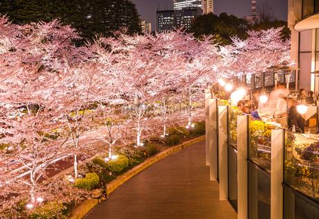 東京ミッドタウンの桜(満開)の写真素材 [FYI03814717]