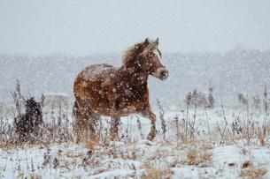 冬の馬の写真素材 [FYI03814778]