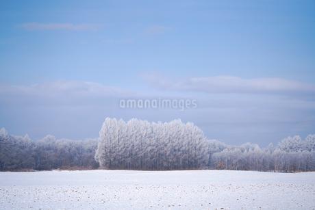 冬の十勝の写真素材 [FYI03814787]