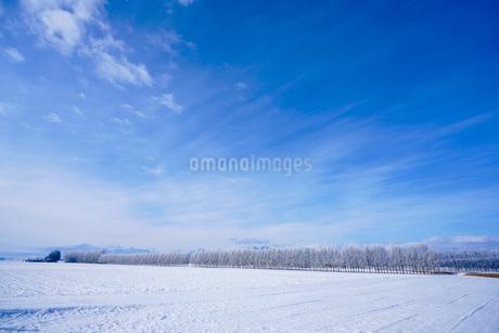 冬の十勝の写真素材 [FYI03814789]