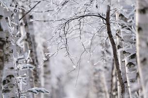 霧氷の写真素材 [FYI03814791]