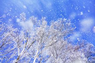 霧氷と青空の写真素材 [FYI03814793]