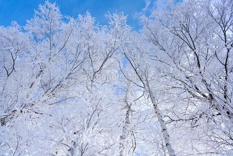 霧氷と青空の写真素材 [FYI03814862]