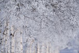 霧氷の写真素材 [FYI03814865]
