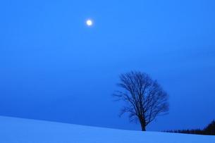 夜の雪原に立つ木立と満月の写真素材 [FYI03814939]