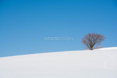 雪原に続く野生動物の足跡と青空の写真素材 [FYI03814946]