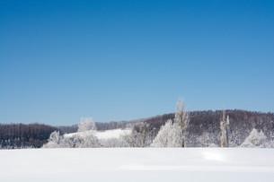 冬の寒い朝の木立と青空の写真素材 [FYI03814949]