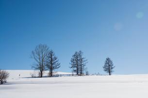 冬木立と青空の写真素材 [FYI03814952]