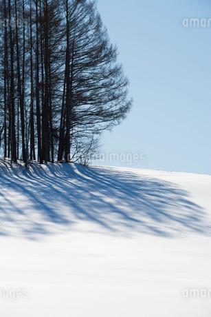 雪原のカラマツ林の影の写真素材 [FYI03814963]