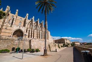 パルマ大聖堂と椰子:スペイン・マヨルカ島の写真素材 [FYI03815018]