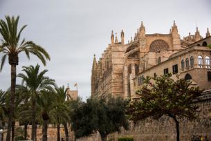 パルマ大聖堂と椰子の木:マヨルカ島の写真素材 [FYI03815047]