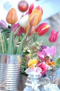 冬咲きのチューリップの写真素材 [FYI03815118]
