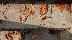 落葉の写真素材 [FYI03815270]