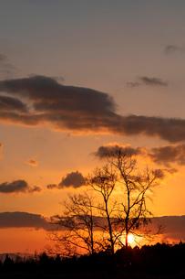 小林の朝の写真素材 [FYI03815300]