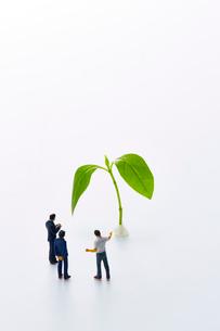 植物の葉とミニチュアの人の写真素材 [FYI03815784]