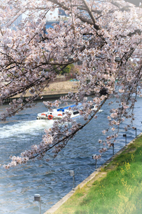 桜と遊覧船の写真素材 [FYI03815833]