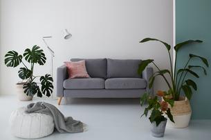 観葉植物がたくさんあるリビングルームの写真素材 [FYI03816001]