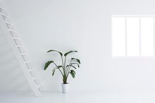 白い空間の中にある観葉植物の写真素材 [FYI03816012]