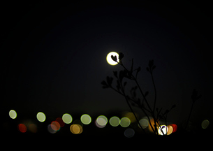 満月の夜の写真素材 [FYI03816134]