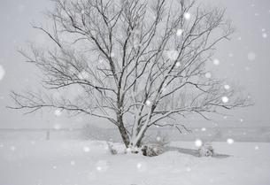 多摩川雪景色の写真素材 [FYI03816140]