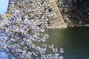 大阪城公園外堀と桜の写真素材 [FYI03816249]