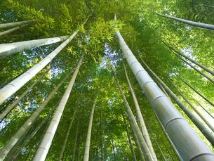 竹林の写真素材 [FYI03816251]
