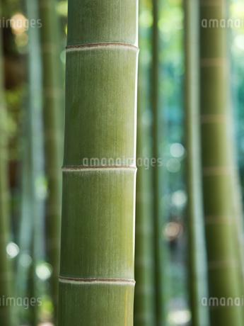 竹林の写真素材 [FYI03816263]