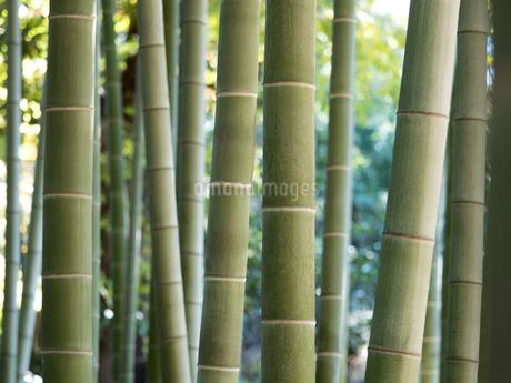 竹林の写真素材 [FYI03816264]
