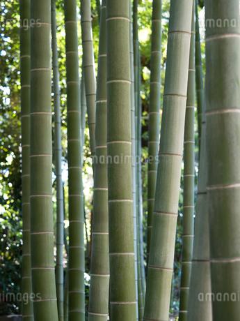 竹林の写真素材 [FYI03816265]