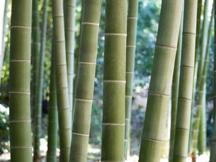 竹林の写真素材 [FYI03816268]