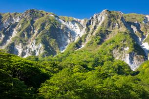 新緑の伯耆大山北壁の写真素材 [FYI03816450]