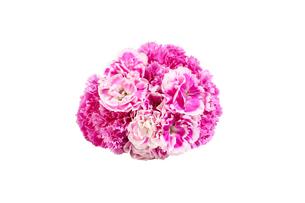 カーネーションの花束の写真素材 [FYI03816628]