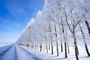 霧氷と青空の写真素材 [FYI03816655]
