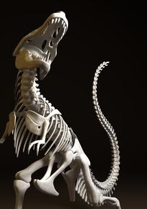 恐竜の化石のイラスト素材 [FYI03816777]